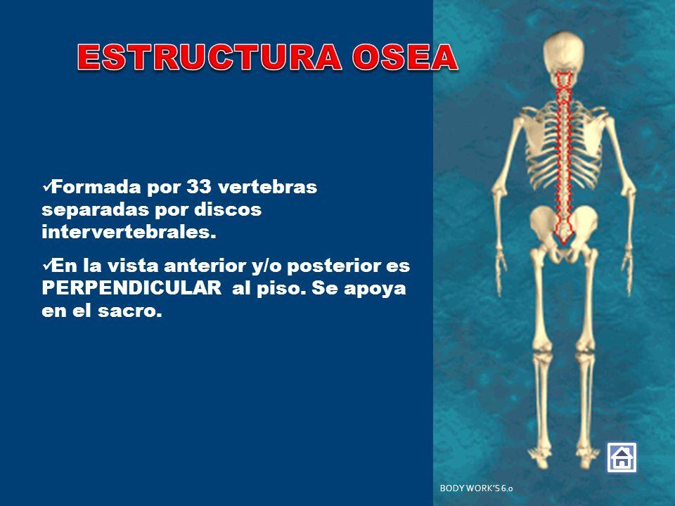 Formada por 33 vertebras separadas por discos intervertebrales. En la vista anterior y/o posterior es PERPENDICULAR al piso. Se apoya en el sacro. BOD