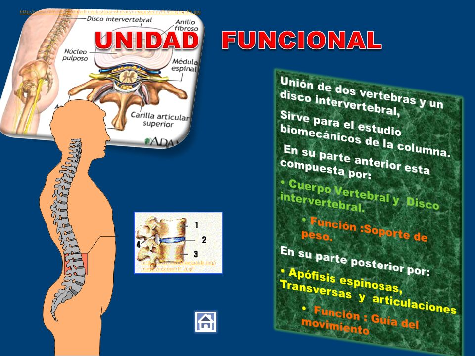 http://www.webdelaespalda.org/i mages/discoperfil_p.gif http://www.nlm.nih.gov/medlineplus/spanish/ency/images/ency/fullsize/19469.jpg