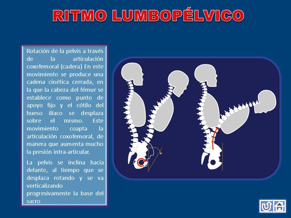 Rotación de la pelvis a través de la articulación coxofemoral (cadera) En este movimiento se produce una cadena cinética cerrada, en la que la cabeza