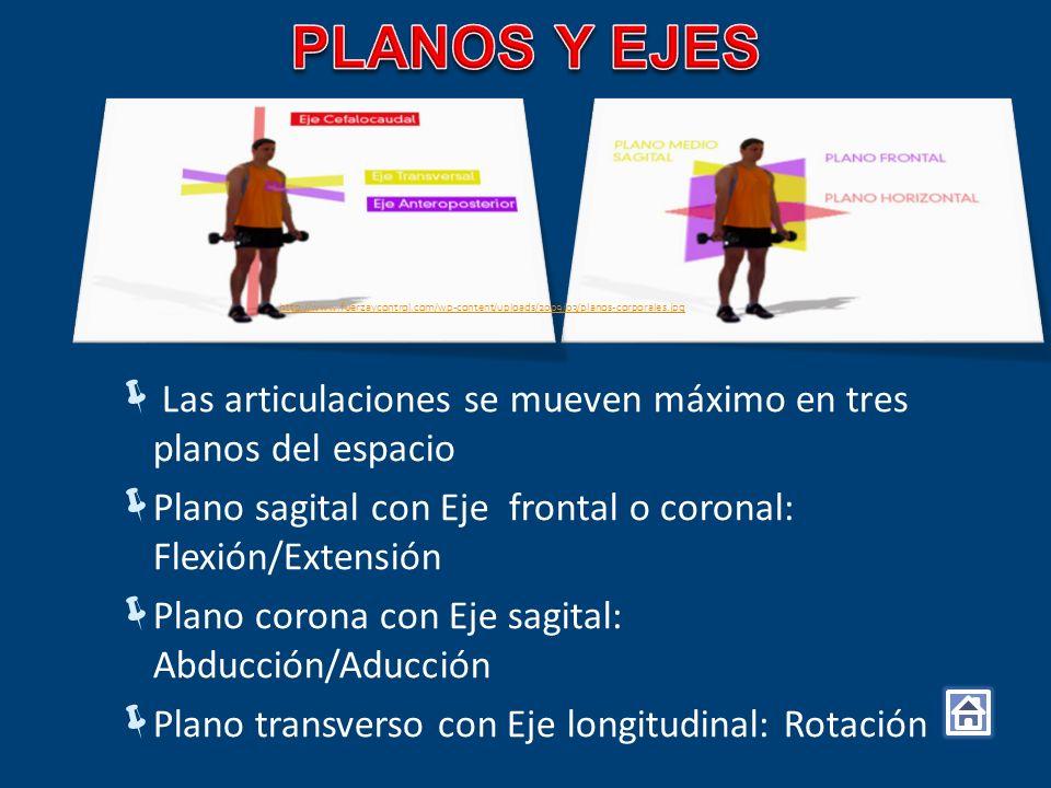 Las articulaciones se mueven máximo en tres planos del espacio Plano sagital con Eje frontal o coronal: Flexión/Extensión Plano corona con Eje sagital