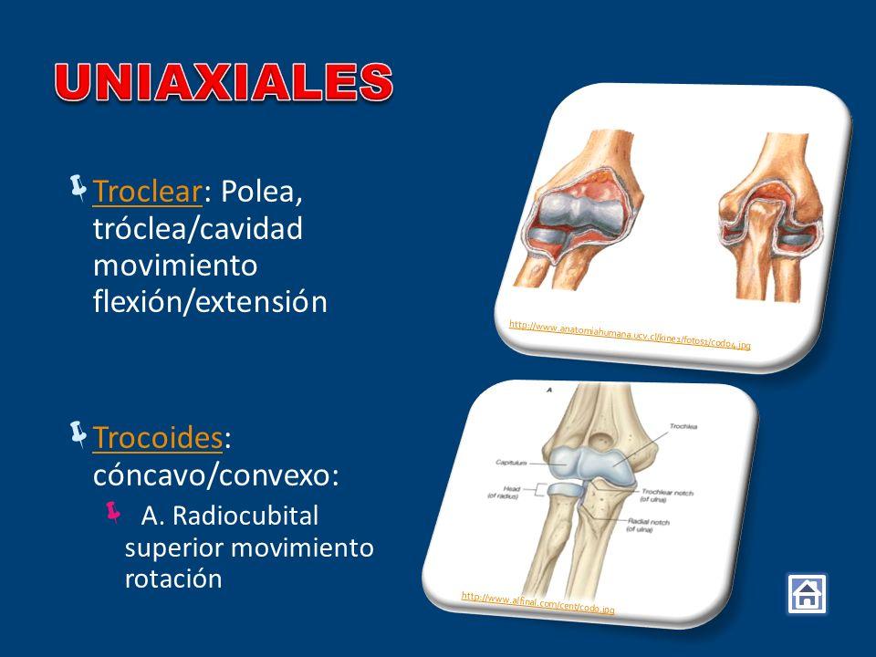 Troclear: Polea, tróclea/cavidad movimiento flexión/extensión Troclear Trocoides: cóncavo/convexo: Trocoides A. Radiocubital superior movimiento rotac