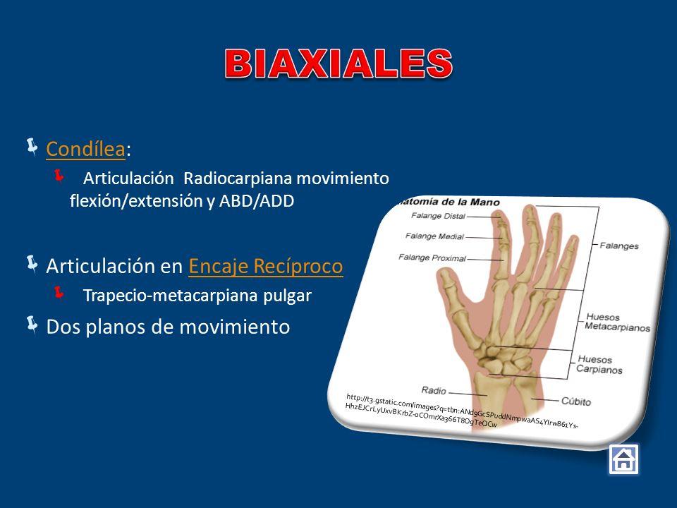 Condílea: Condílea Articulación Radiocarpiana movimiento flexión/extensión y ABD/ADD Articulación en Encaje RecíprocoEncaje Recíproco Trapecio-metacar