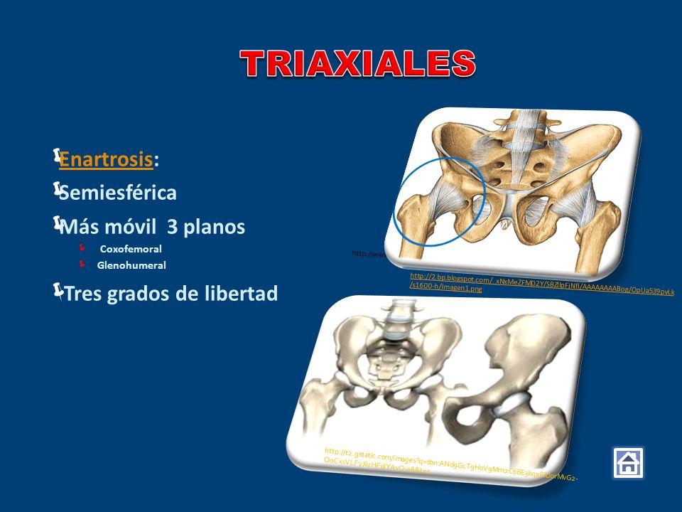 Rotación de la pelvis a través de la articulación coxofemoral (cadera) En este movimiento se produce una cadena cinética cerrada, en la que la cabeza del fémur se establece como punto de apoyo fijo y el cótilo del hueso ilíaco se desplaza sobre el mismo.