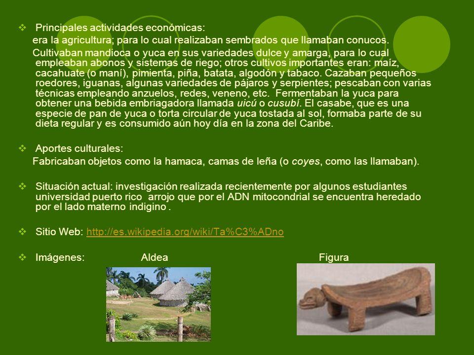 Principales actividades económicas: era la agricultura; para lo cual realizaban sembrados que llamaban conucos. Cultivaban mandioca o yuca en sus vari