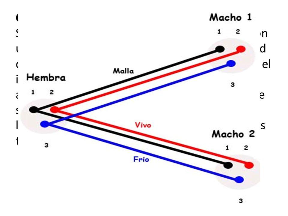 Cable en Y Se suele utilizar para alimentar varias etapas con una sola salida master de la mesa, sin necesidad de usar caros splitters, ni transformad