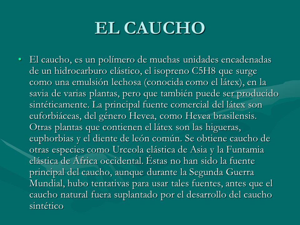 EL CAUCHO El caucho, es un polímero de muchas unidades encadenadas de un hidrocarburo elástico, el isopreno C5H8 que surge como una emulsión lechosa (