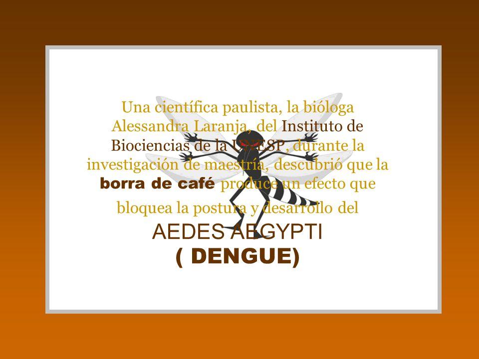 El proceso es extremadamente simple: El mosquito puede ser combatido colocándose borra de café en los platitos de recolección de agua de las macetas, en los platos de los xaxins, dentro de las hojas de las bromelias...