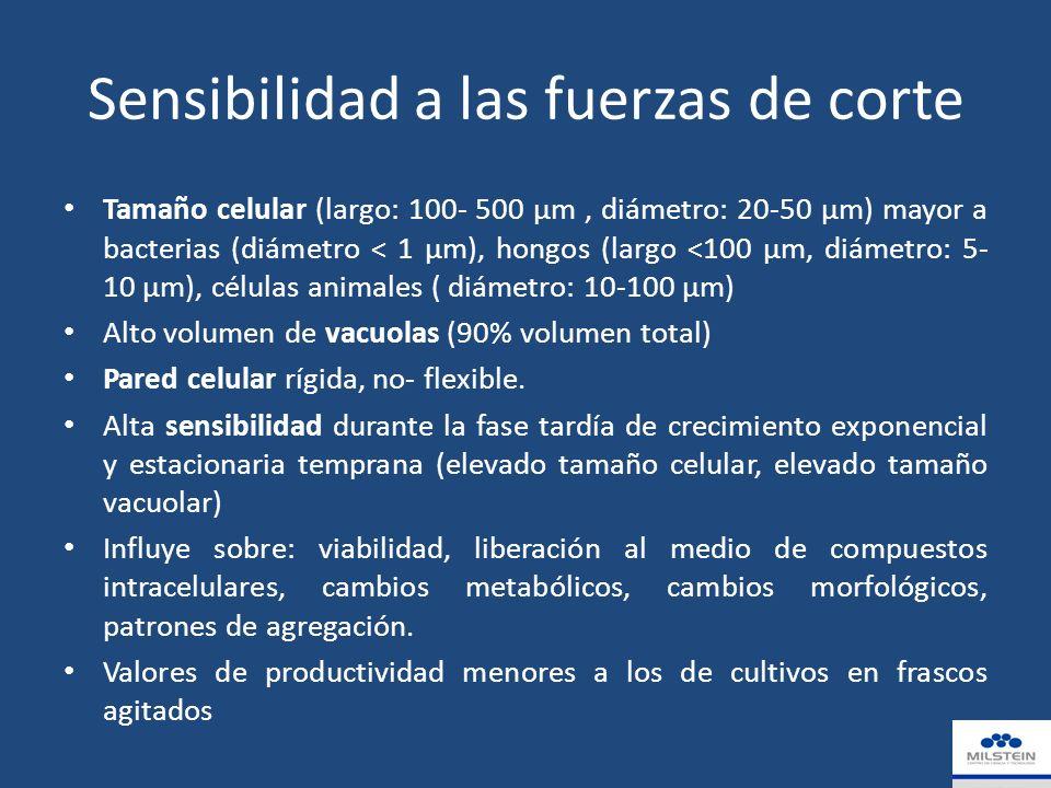 Sensibilidad a las fuerzas de corte Tamaño celular (largo: 100- 500 µm, diámetro: 20-50 µm) mayor a bacterias (diámetro < 1 µm), hongos (largo <100 µm, diámetro: 5- 10 µm), células animales ( diámetro: 10-100 µm) Alto volumen de vacuolas (90% volumen total) Pared celular rígida, no- flexible.