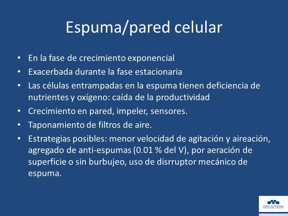 Espuma/pared celular En la fase de crecimiento exponencial Exacerbada durante la fase estacionaria Las células entrampadas en la espuma tienen deficiencia de nutrientes y oxígeno: caída de la productividad Crecimiento en pared, impeler, sensores.