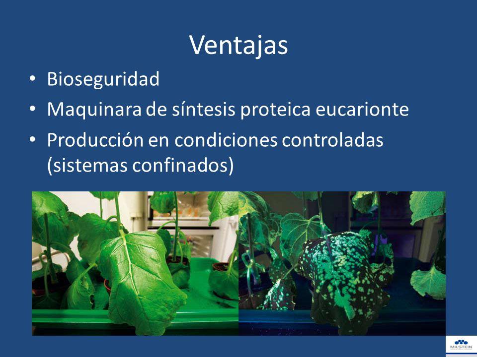 Agregados-reología Distribución de tamaños según la especie, inóculo, medio de cultivo, tipo de bioreactor, condiciones de cultivo, etc.