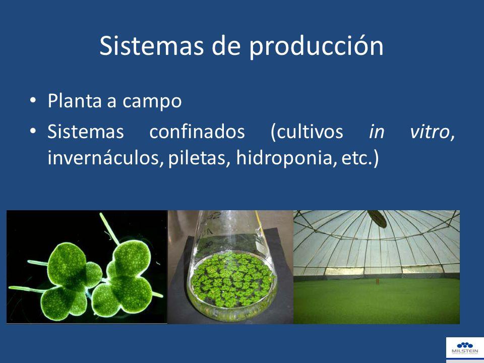 Sistemas de producción Planta a campo Sistemas confinados (cultivos in vitro, invernáculos, piletas, hidroponia, etc.)