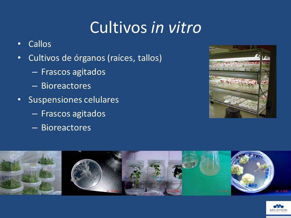 Cultivos in vitro Callos Cultivos de órganos (raíces, tallos) – Frascos agitados – Bioreactores Suspensiones celulares – Frascos agitados – Bioreactores