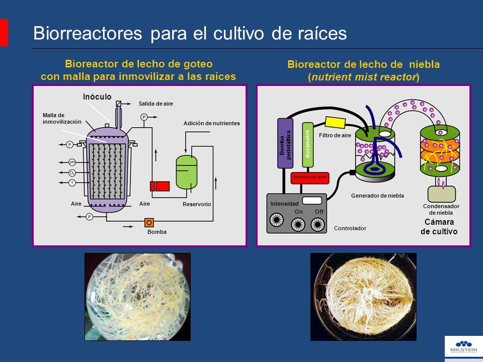 Bioreactor de lecho de niebla (nutrient mist reactor) Bioreactor de lecho de goteo con malla para inmovilizar a las raíces Biorreactores para el cultivo de raíces Bomba de aire Rotámetro Bomba peristáltica Generador de niebla Cámara de cultivo Controlador OnOff Intensidad Filtro de aire Condensador de niebla Adición de nutrientes Bomba Salida de aire Aire Inóculo Reservorio Malla de inmovilización Tomado de:Hairy Roots, Culture and Application, 1997.