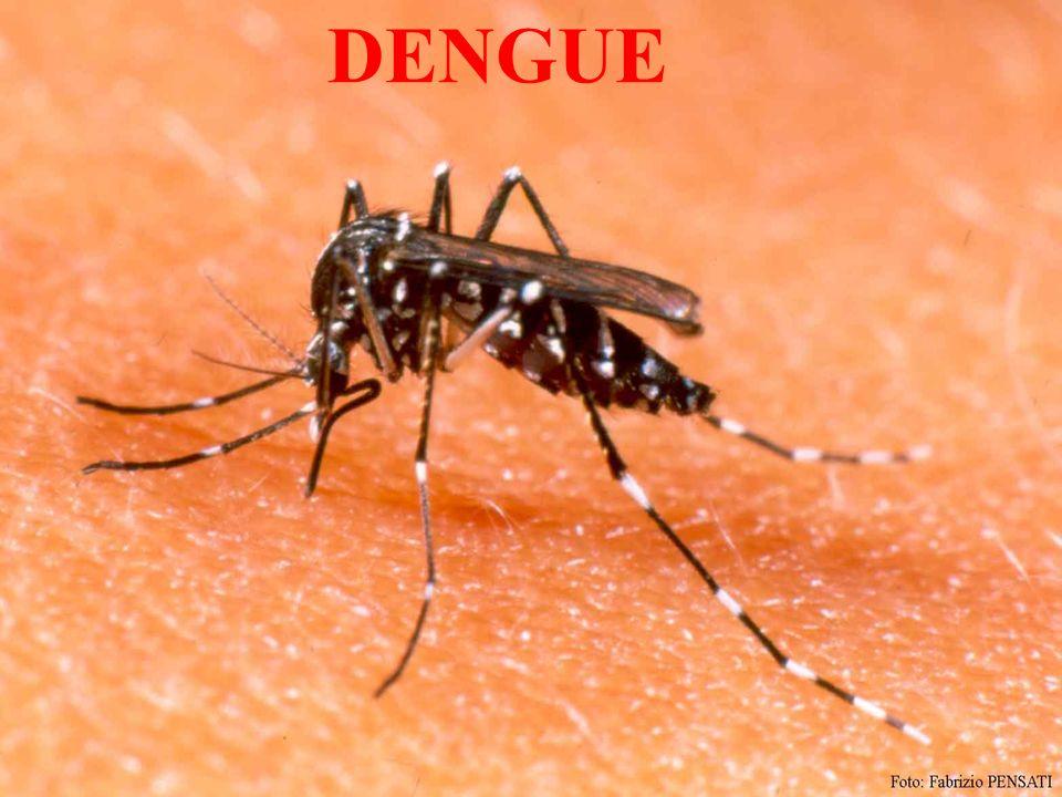 ¿Qué es el Dengue .