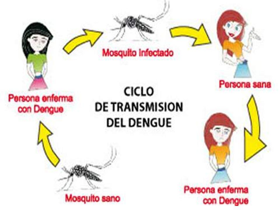 Tipos de dengue Existen cuatro serotipos del virus del dengue : 1,2,3 y 4.