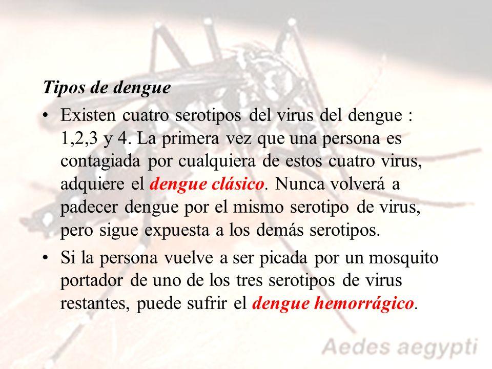 PROTECCIÓN PARA LAS PICADURAS DE MOSQUITOS Ø Colocar mosquiteros o telas metálicas en las viviendas.