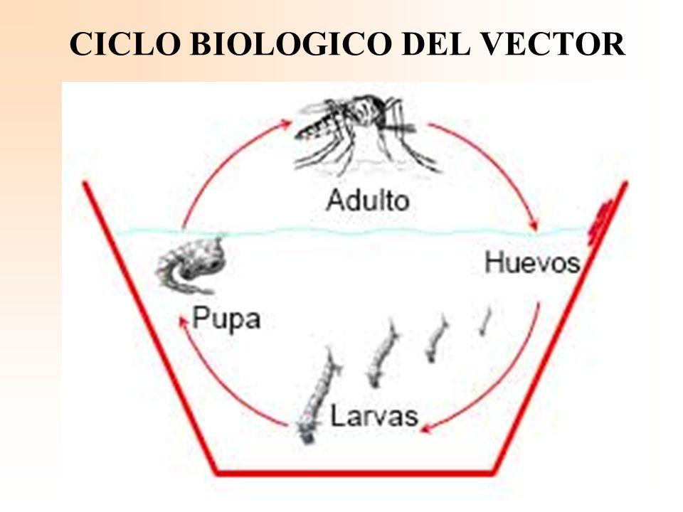 Se debe evitar que a las personas enfermas, las pique el mosquito, para evitar la difusión de la enfermedad