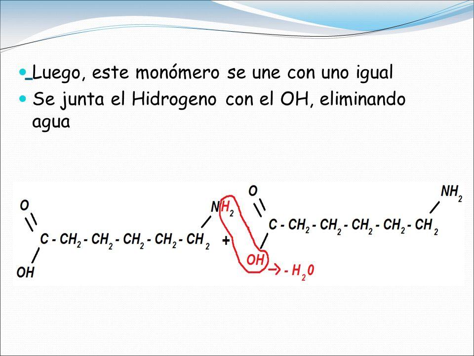 La reacción terminada es la macromolécula del Nylon
