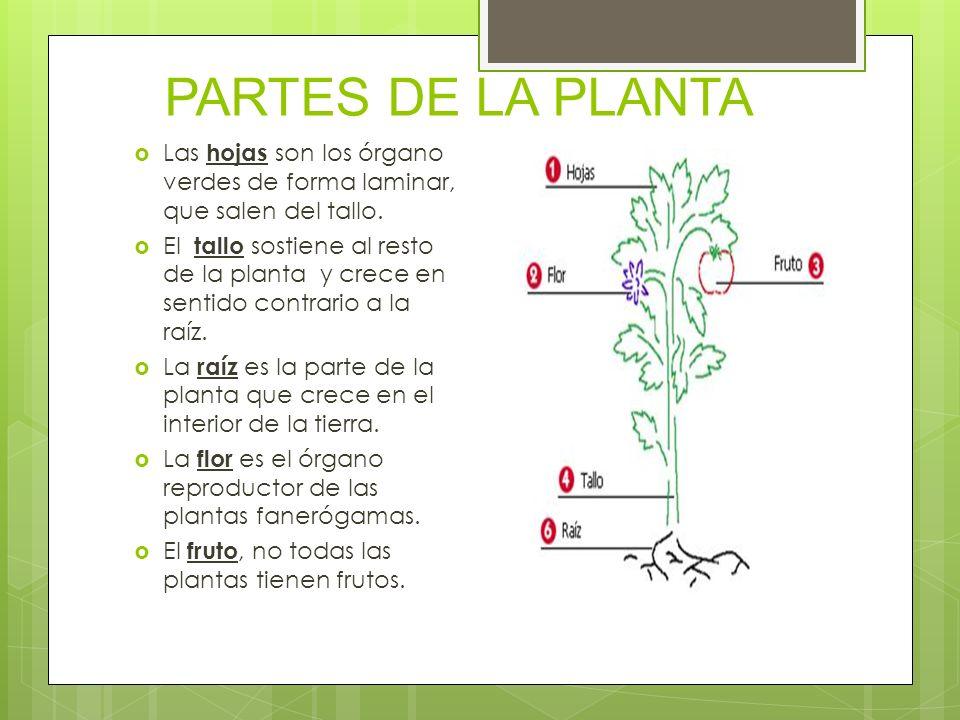 Las plantas Hay plantas en casi todas las zonas del planeta, tanto en la tierra como dentro del agua.