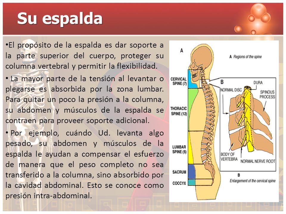 Su espalda El propósito de la espalda es dar soporte a la parte superior del cuerpo, proteger su columna vertebral y permitir la flexibilidad. La mayo