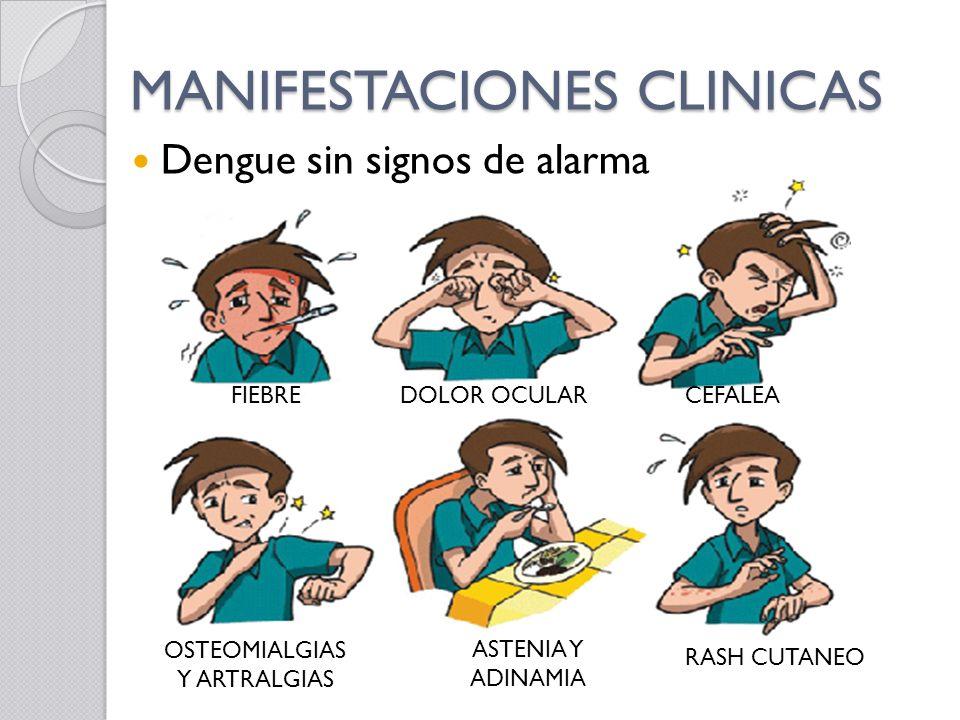 MANIFESTACIONES CLINICAS Dengue sin signos de alarma FIEBREDOLOR OCULARCEFALEA OSTEOMIALGIAS Y ARTRALGIAS ASTENIA Y ADINAMIA RASH CUTANEO