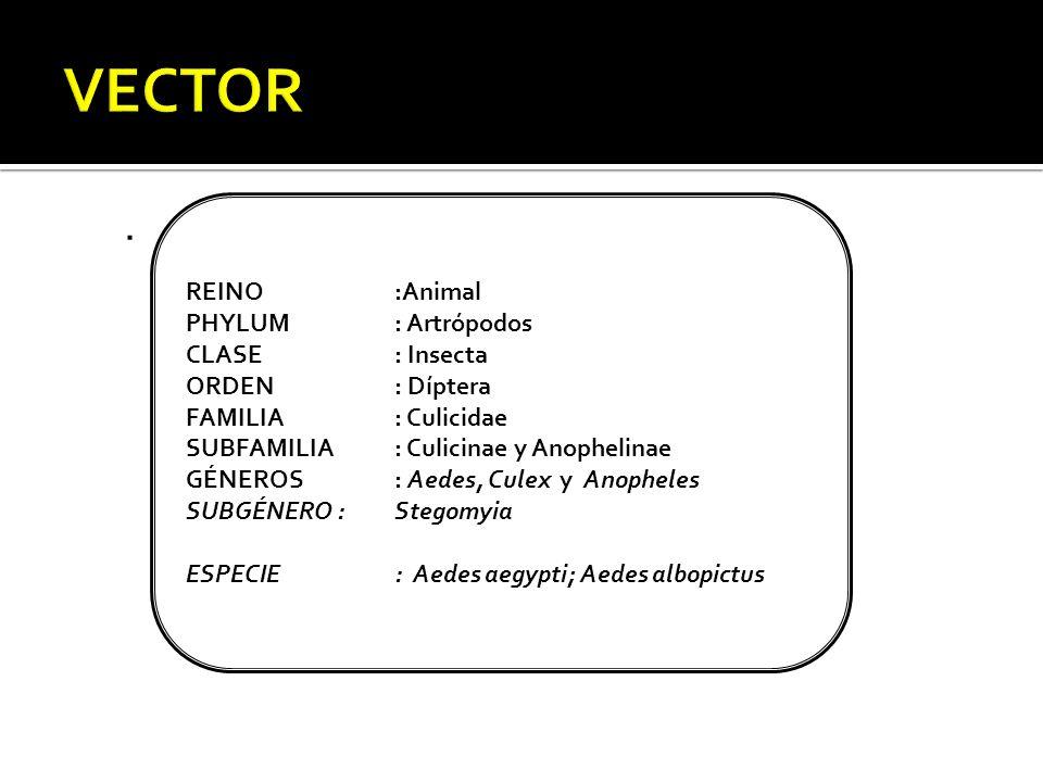 . REINO:Animal PHYLUM: Artrópodos CLASE: Insecta ORDEN: Díptera FAMILIA: Culicidae SUBFAMILIA: Culicinae y Anophelinae GÉNEROS: Aedes, Culex y Anopheles SUBGÉNERO :Stegomyia ESPECIE: Aedes aegypti; Aedes albopictus
