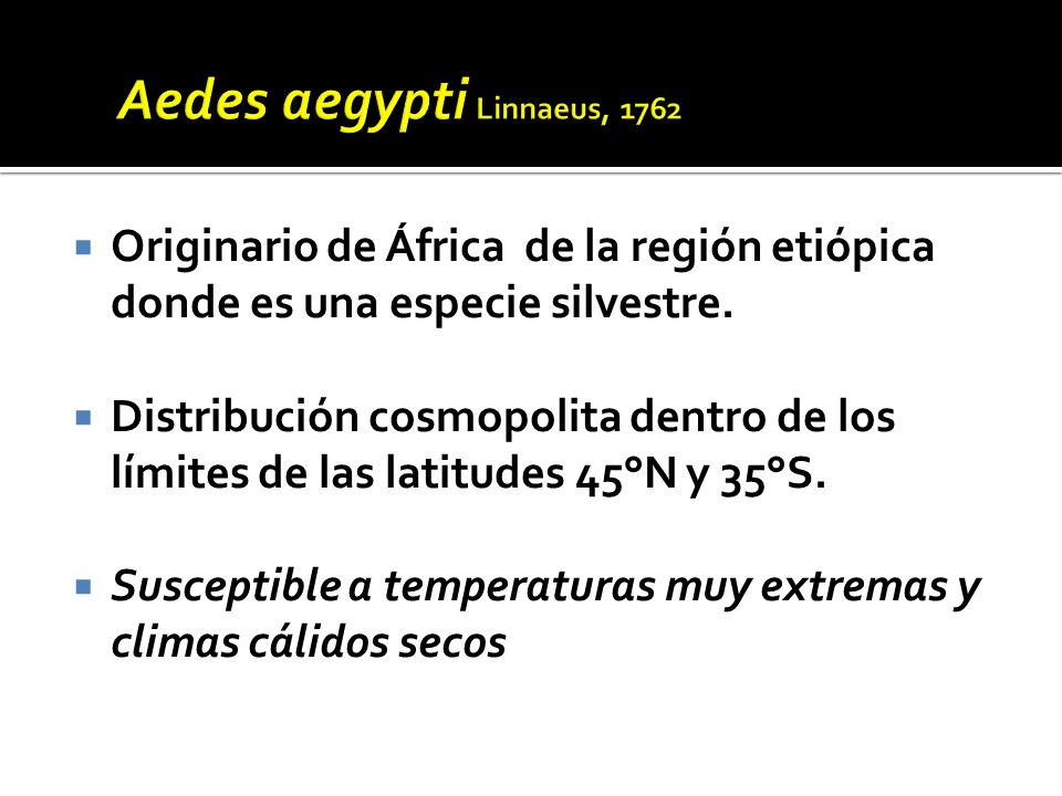 El adulto emergente es un mosquito de color negro.