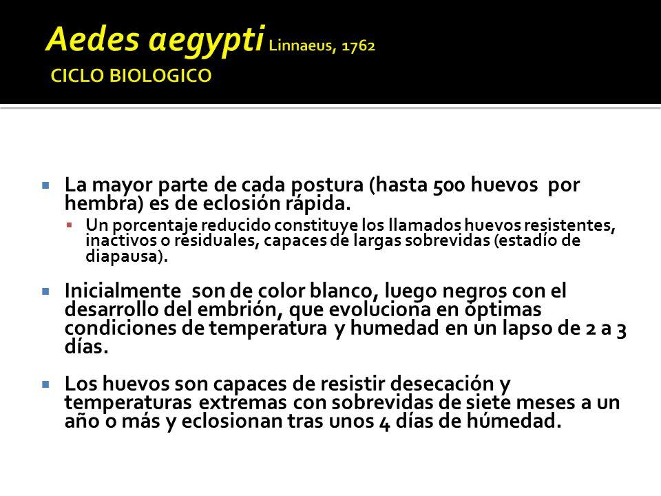 Muerte por apoptosis Muerte por apoptosis