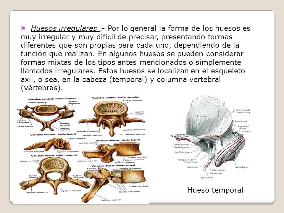 Huesos irregulares.- Por lo general la forma de los huesos es muy irregular y muy difícil de precisar, presentando formas diferentes que son propias p