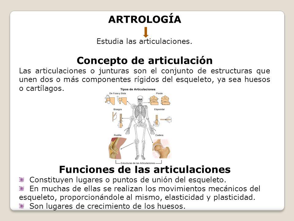ARTROLOGÍA Estudia las articulaciones. Concepto de articulación Las articulaciones o junturas son el conjunto de estructuras que unen dos o más compon