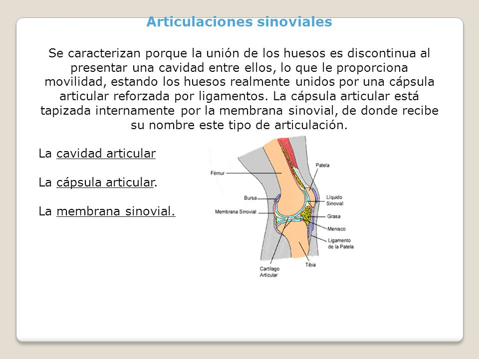Articulaciones sinoviales Se caracterizan porque la unión de los huesos es discontinua al presentar una cavidad entre ellos, lo que le proporciona mov