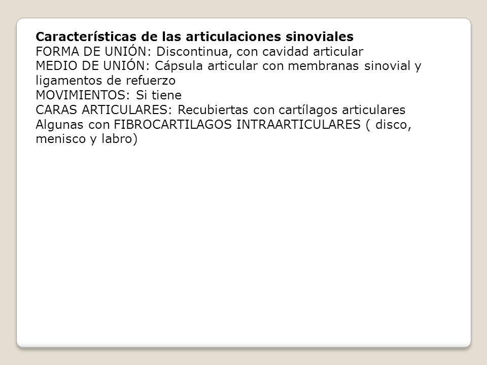Características de las articulaciones sinoviales FORMA DE UNIÓN: Discontinua, con cavidad articular MEDIO DE UNIÓN: Cápsula articular con membranas si