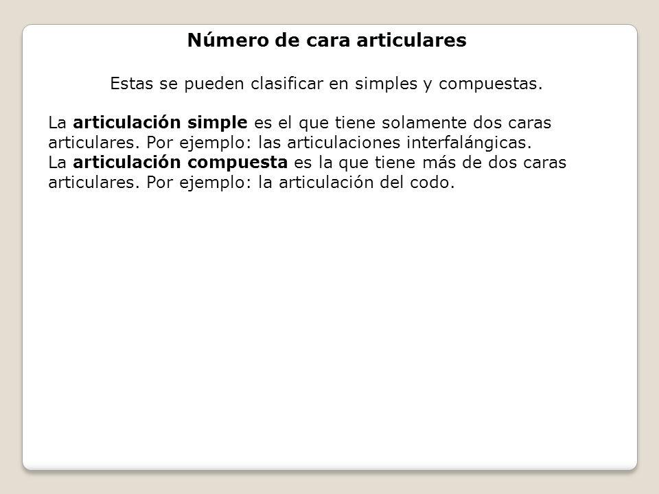 Número de cara articulares Estas se pueden clasificar en simples y compuestas. La articulación simple es el que tiene solamente dos caras articulares.