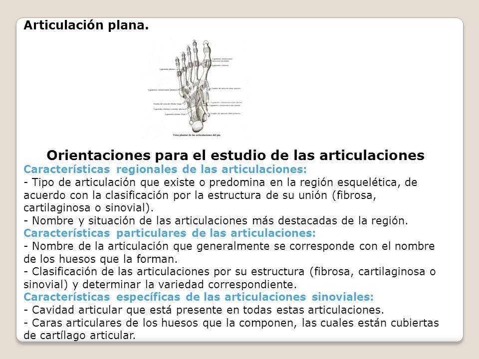 Articulación plana. Orientaciones para el estudio de las articulaciones Características regionales de las articulaciones: - Tipo de articulación que e