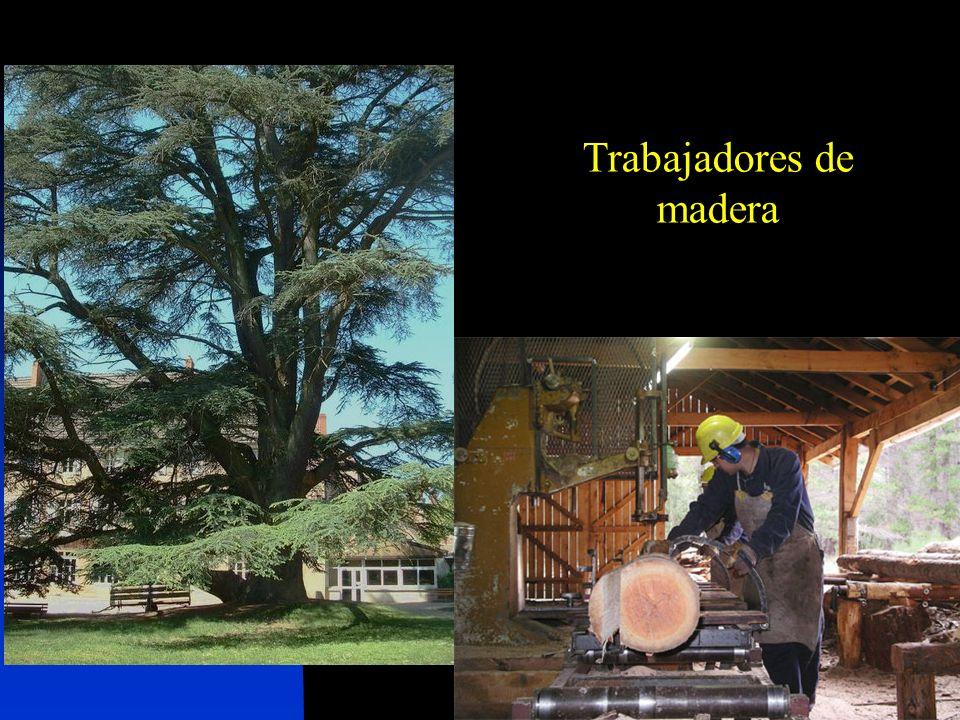 Trabajadores de madera