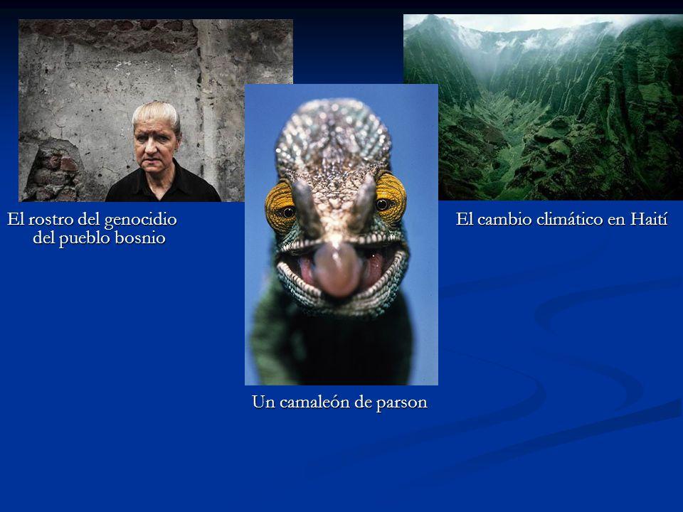 El rostro del genocidio del pueblo bosnio El cambio climático en Haití Un camaleón de parson