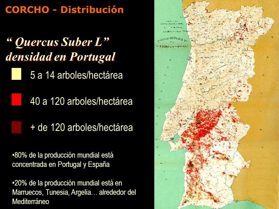 Quercus Suber L densidad en Portugal 5 a 14 arboles/hectárea 40 a 120 arboles/hectárea + de 120 arboles/hectárea 80% de la producción mundial está con