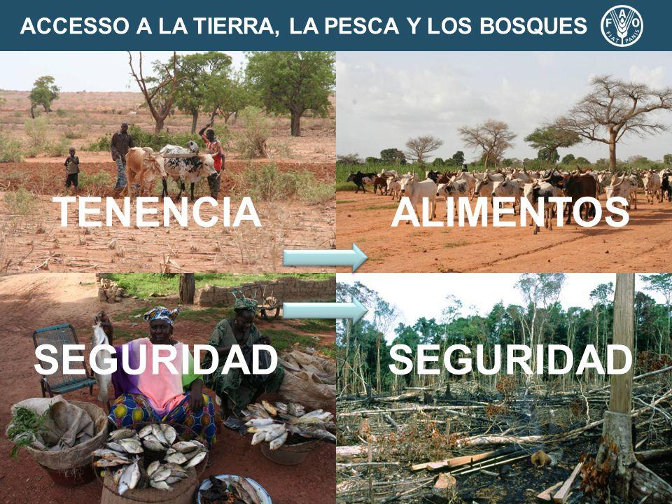 ACCESSO A LA TIERRA, LA PESCA Y LOS BOSQUES TENENCIA SEGURIDAD ALIMENTOS SEGURIDAD