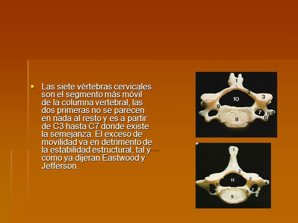 Las siete vértebras cervicales son el segmento más móvil de la columna vertebral, las dos primeras no se parecen en nada al resto y es a partir de C3 hasta C7 donde existe la semejanza.