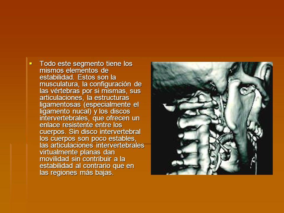 Todo este segmento tiene los mismos elementos de estabilidad. Estos son la musculatura, la configuración de las vértebras por si mismas, sus articulac