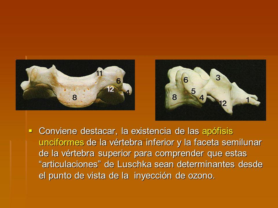 Conviene destacar, la existencia de las apófisis unciformes de la vértebra inferior y la faceta semilunar de la vértebra superior para comprender que