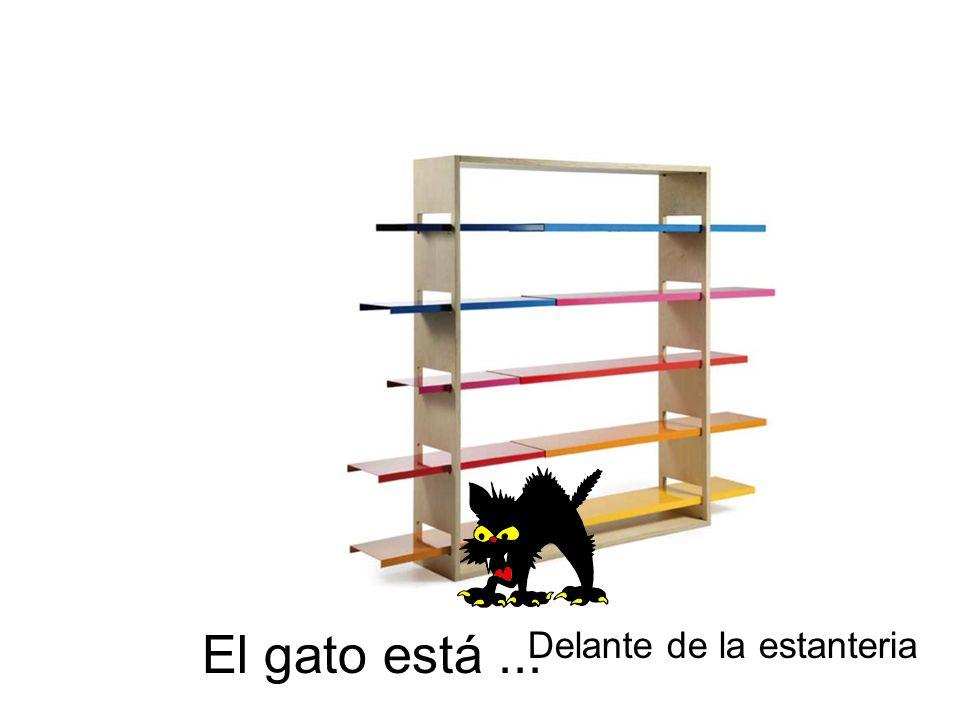 El gato está... Delante de la estanteria