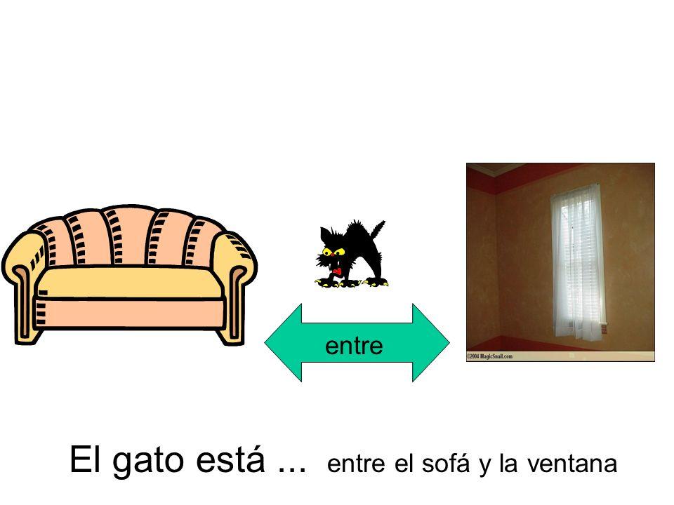 entre El gato está... entre el sofá y la ventana