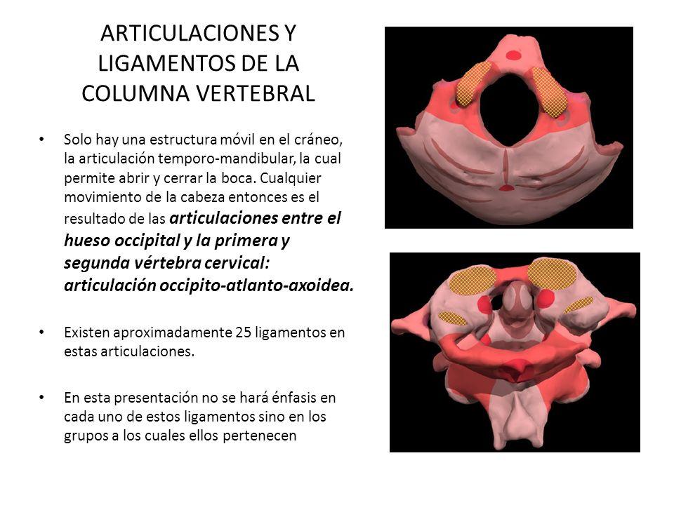 ARTICULACIONES Y LIGAMENTOS DE LA COLUMNA VERTEBRAL Solo hay una estructura móvil en el cráneo, la articulación temporo-mandibular, la cual permite ab
