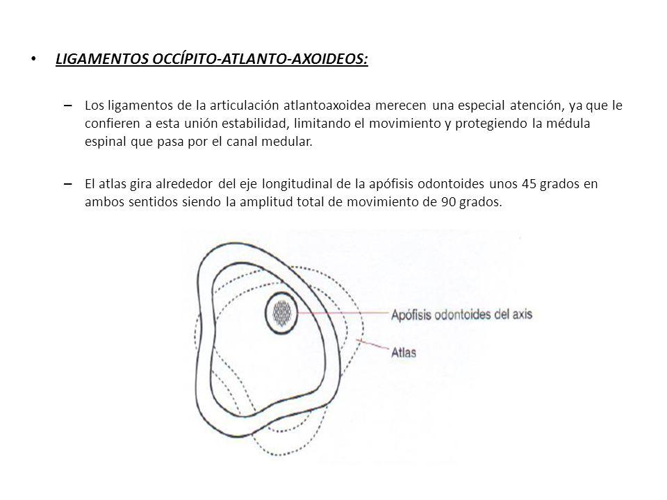 LIGAMENTOS OCCÍPITO-ATLANTO-AXOIDEOS: – Los ligamentos de la articulación atlantoaxoidea merecen una especial atención, ya que le confieren a esta uni