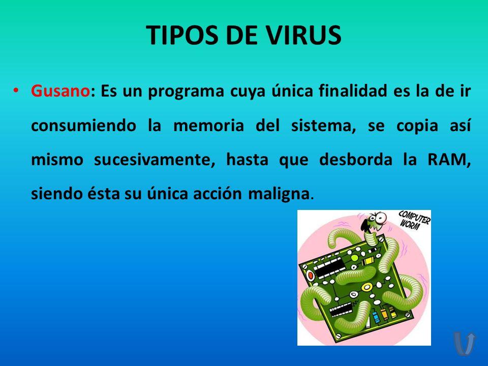 TIPOS DE VIRUS Gusano: Es un programa cuya única finalidad es la de ir consumiendo la memoria del sistema, se copia así mismo sucesivamente, hasta que
