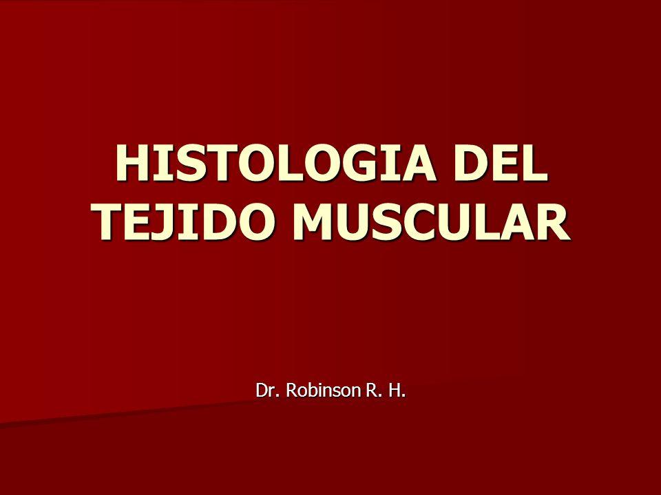 HISTOLOGIA DEL TEJIDO MUSCULAR Dr. Robinson R. H.