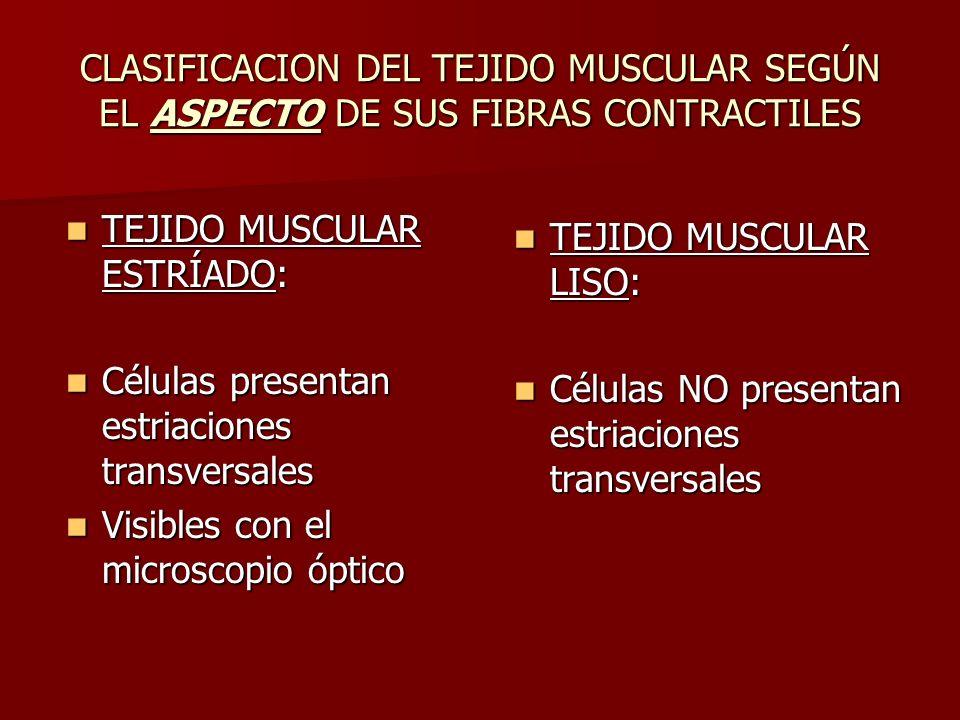 CLASIFICACION DEL TEJIDO MUSCULAR SEGÚN EL ASPECTO DE SUS FIBRAS CONTRACTILES TEJIDO MUSCULAR ESTRÍADO: TEJIDO MUSCULAR ESTRÍADO: Células presentan es