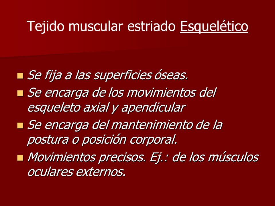 Tejido muscular estriado Esquelético Se fija a las superficies óseas. Se fija a las superficies óseas. Se encarga de los movimientos del esqueleto axi