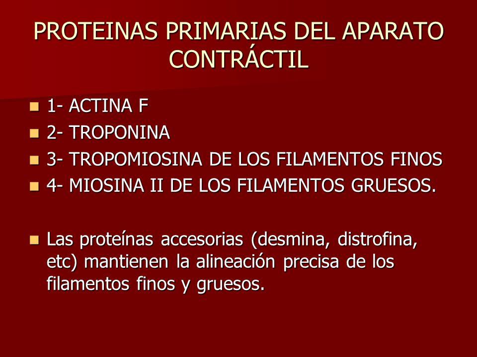 PROTEINAS PRIMARIAS DEL APARATO CONTRÁCTIL 1- ACTINA F 1- ACTINA F 2- TROPONINA 2- TROPONINA 3- TROPOMIOSINA DE LOS FILAMENTOS FINOS 3- TROPOMIOSINA D